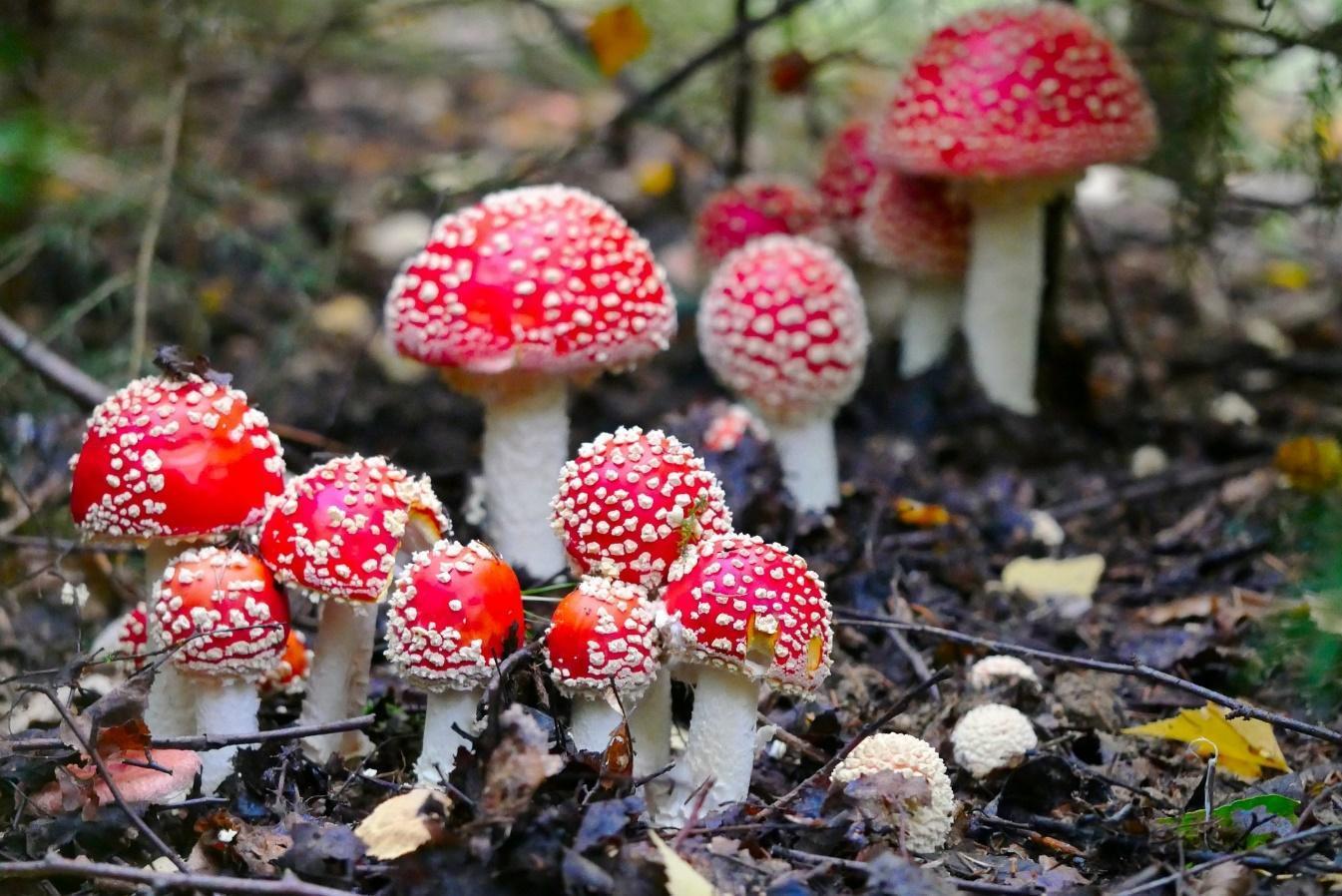 отравление грибами через сколько времени